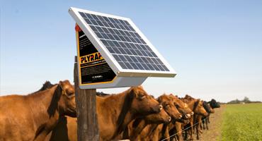 Electrificadores Compactos Solares
